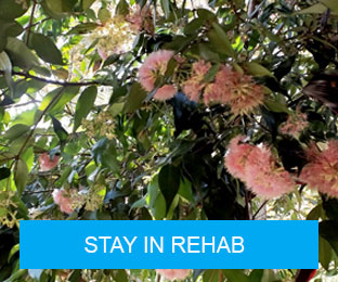 Stay in Rehab